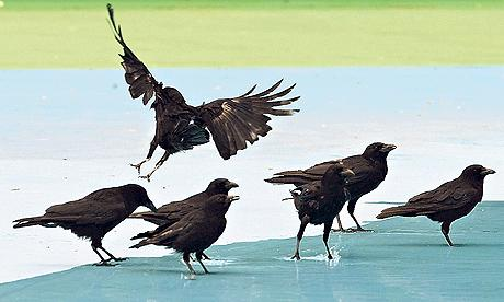 bunch of crows, a good gabfest but still nothing changes with safe water access round the world